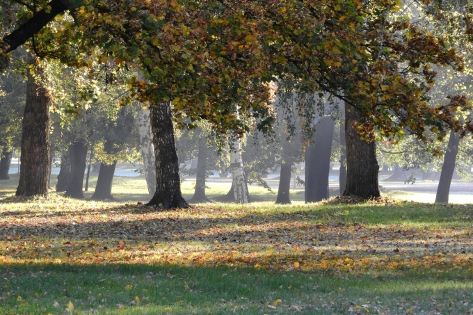 the-trees-in-the-fall-2052252_1920